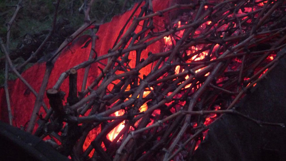 Vine shoot burning